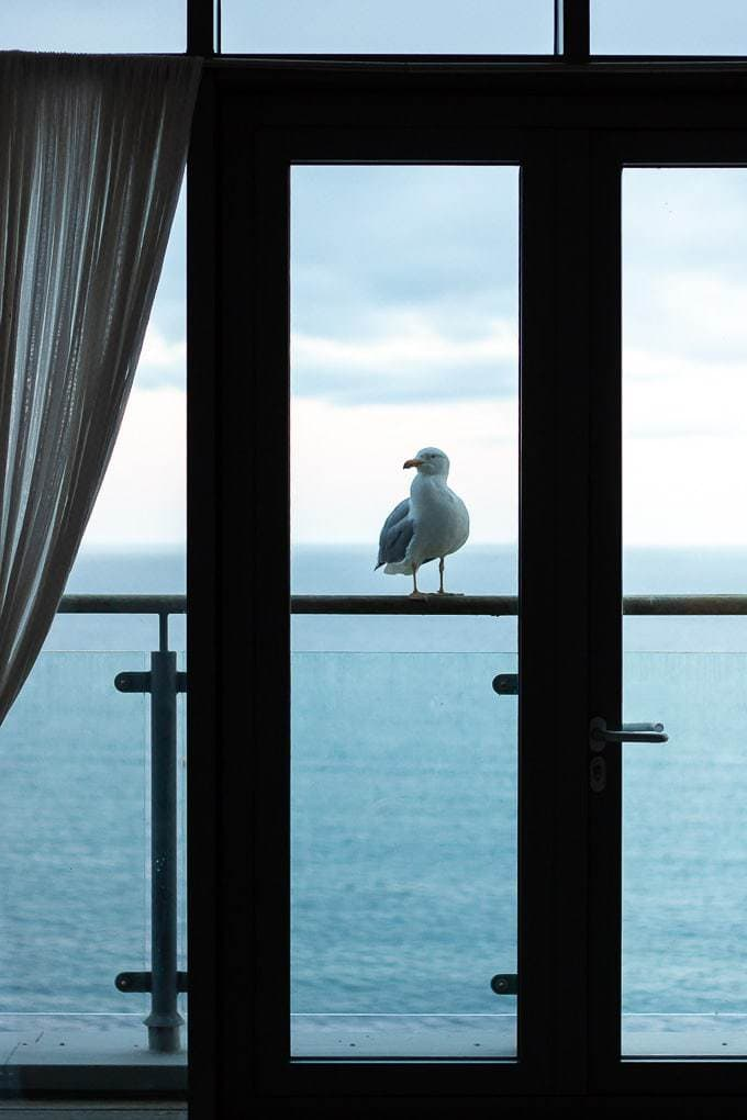 View from Gylly Sunrise apartment with seagull on the balcony