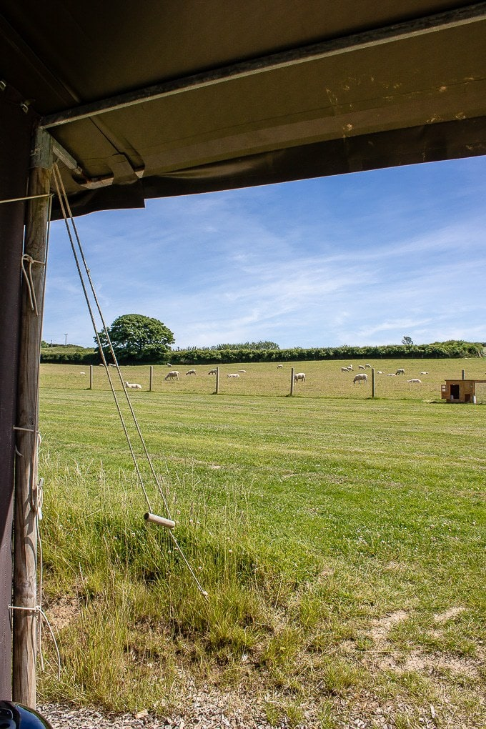 View from the Canvas Lodge at Ilfracombe Farm Featherdown Farm review