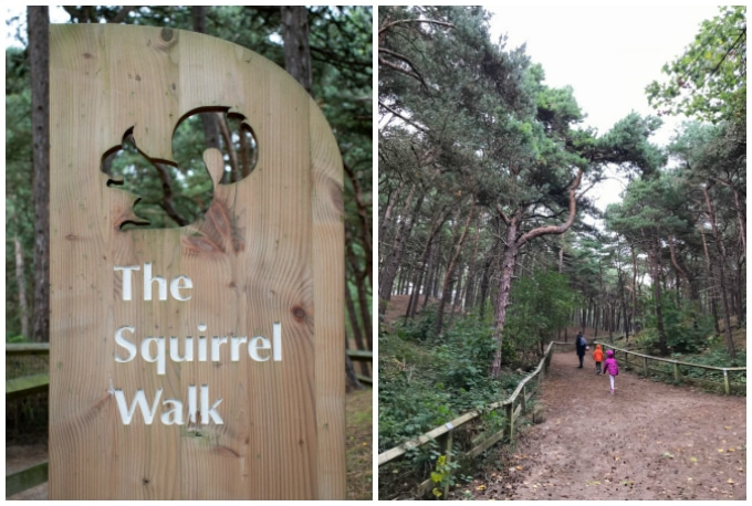 Red Squirrel Colony Southport Review