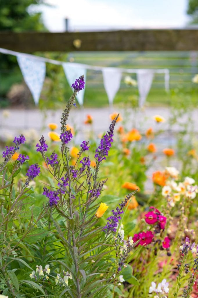 Close up of wild flowers with bunting in the background