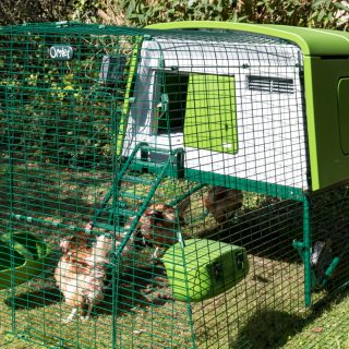 Omlet Eglu Cube review. MK2 chicken coop and 2m run.