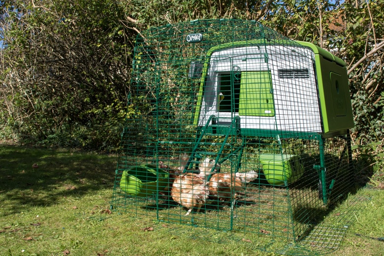 Omlet Eglu Cube Review - Chicken coop and 2m run with rescue chickens inside