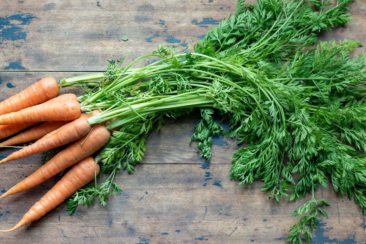 Carrots with leafy green tops.
