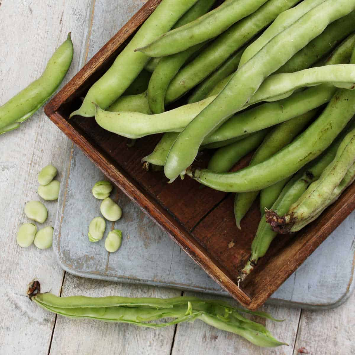 Broad beans on a tray and table.